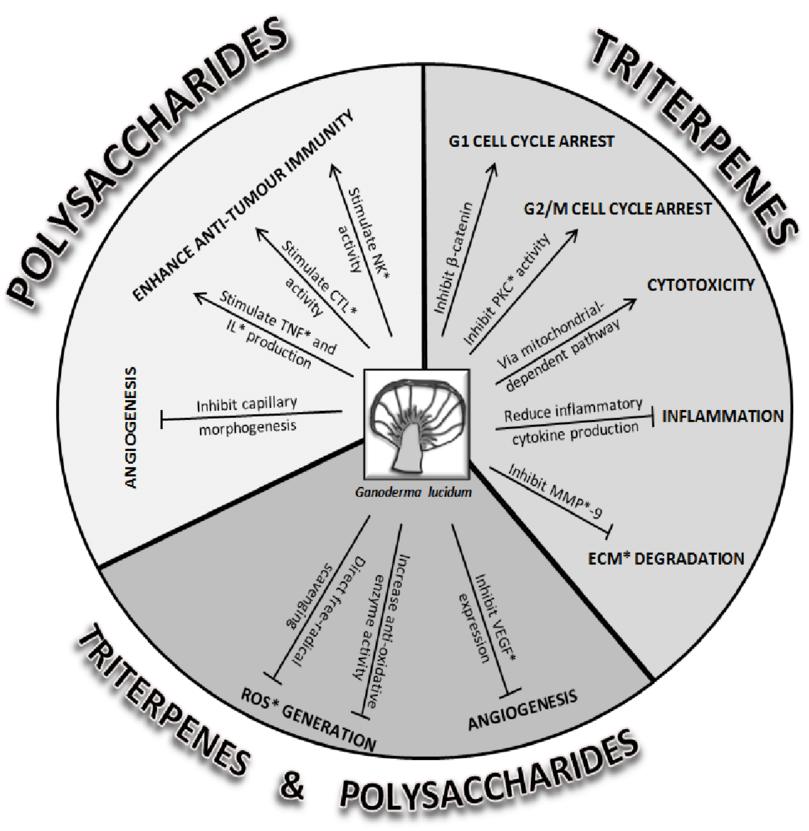 Cơ chế tác động lên tế bào ung thư của Betaglucan (Polysaccharides), Triterpenes